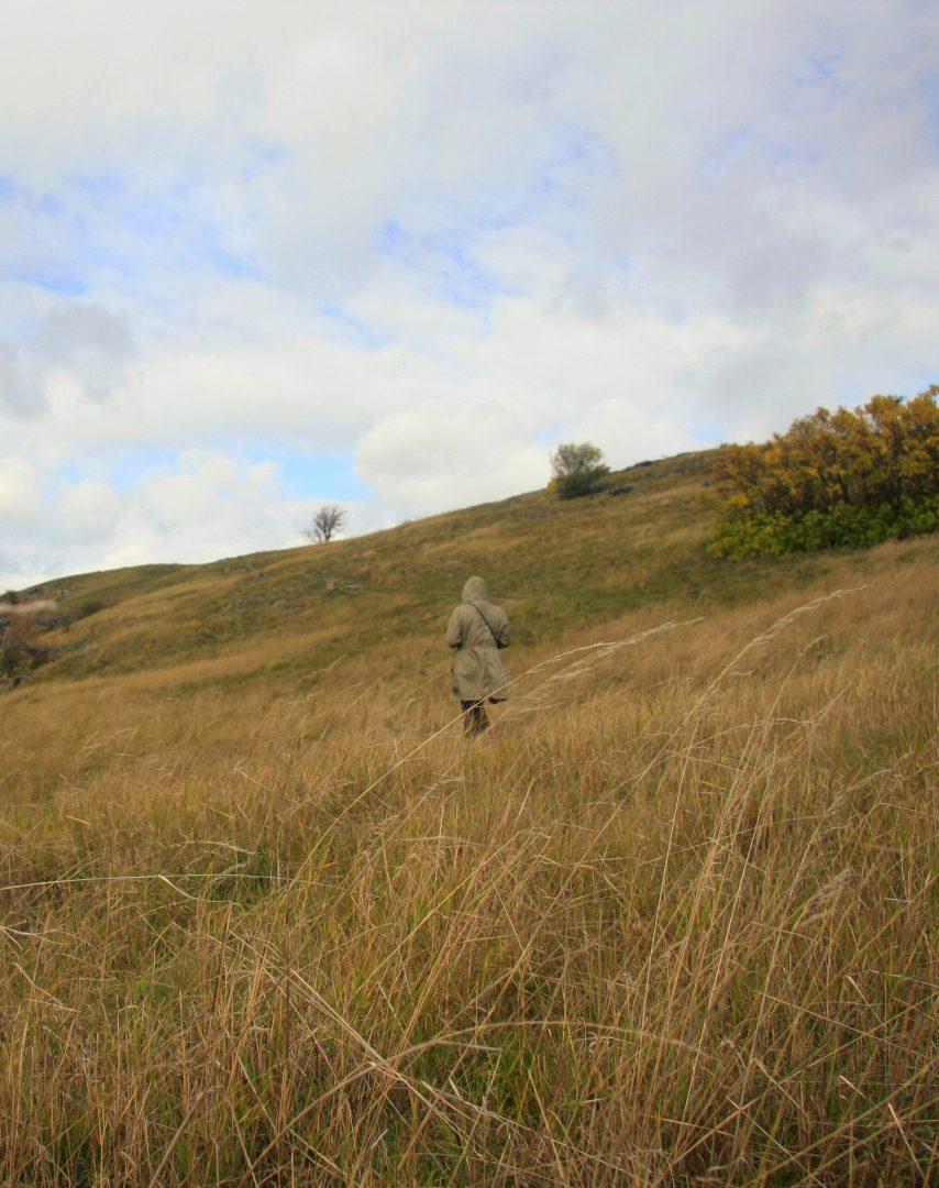 divoka sarka field
